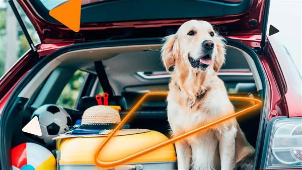 7 dicas para levar seu cachorro na viagem de carro